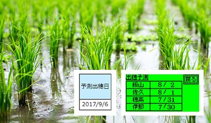 稲の出穂期の予測