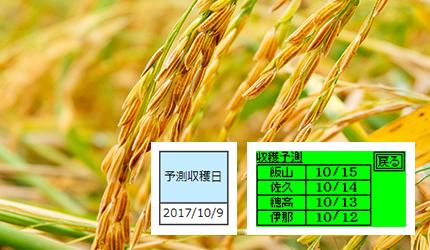稲の収穫期の予測