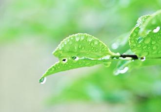 葉濡れ時間を実測