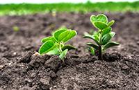 作物の生育管理