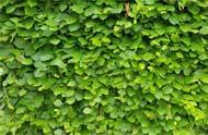 屋上緑化・壁面緑化の潅水自動化